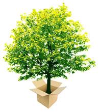 tree_bg